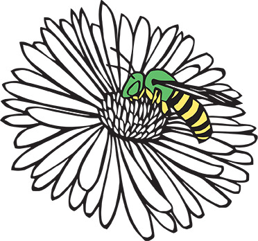 An ode to six native bees