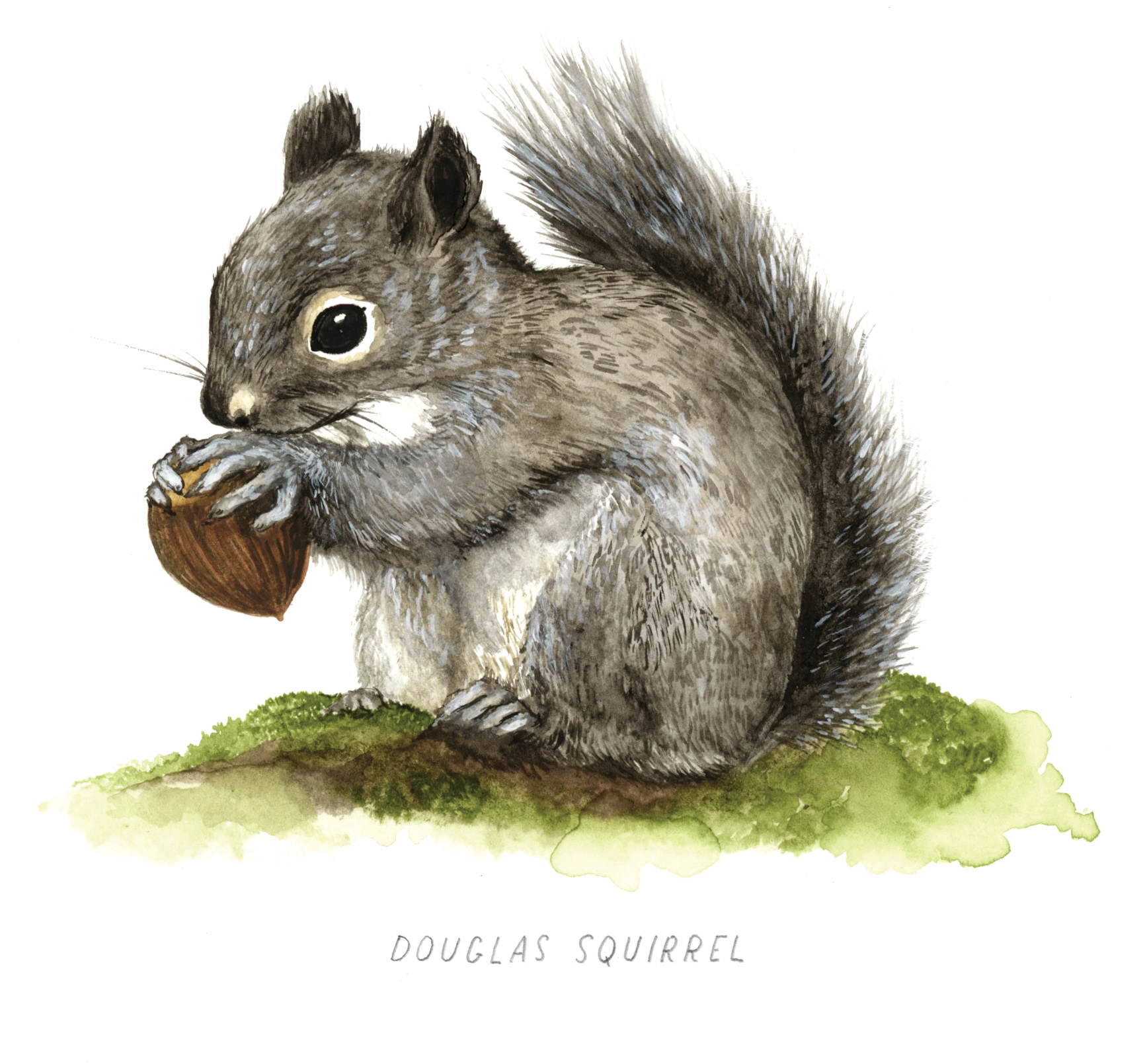 Squirrel illustration by Frida Clements, Ampersand Magazine
